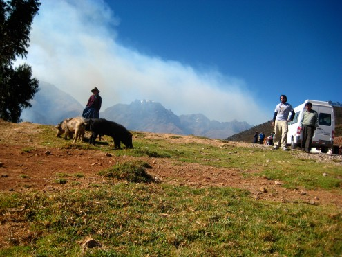 Pigs on the way to ollantaytambo