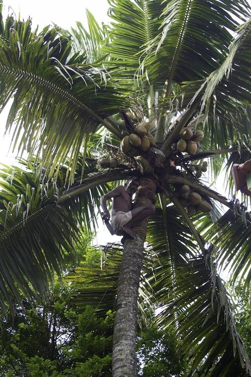 coconut man kerala